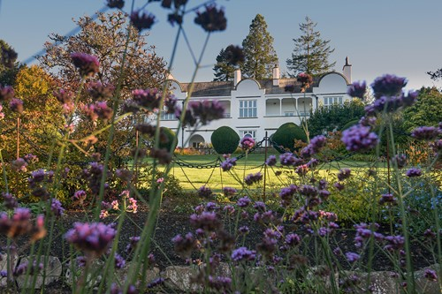 Brockhole garden, purple flowers and house